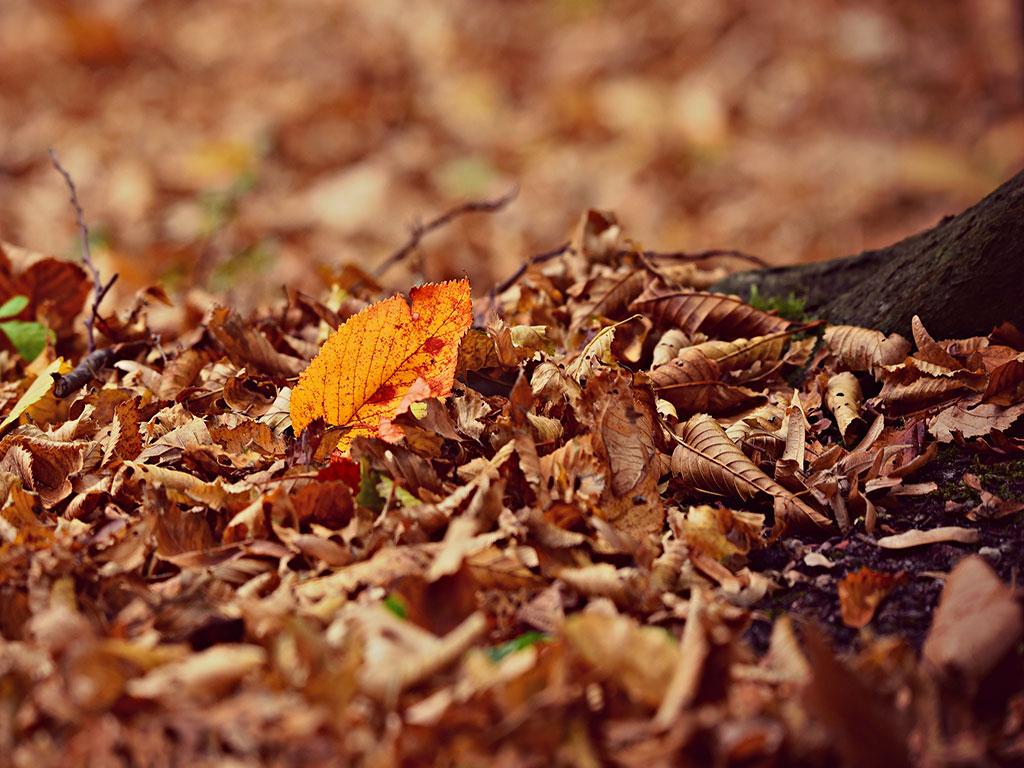 Lasciare le foglie sul prato per molto tempo